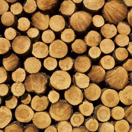 wooden_sunglasses_wood